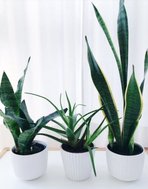 3 low maintenance house plants that clean the air mothering little ones. Black Bedroom Furniture Sets. Home Design Ideas