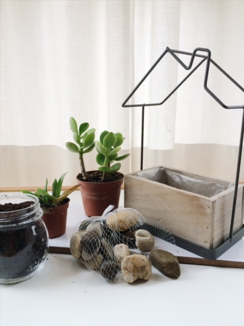 Plant pot in the shape of a house, rocks, two succulants, potting soil