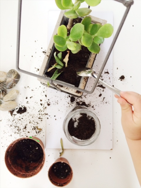 child covering succulants with soil using a teaspoon