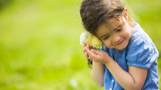 little girl holding a baby chick standing in a field